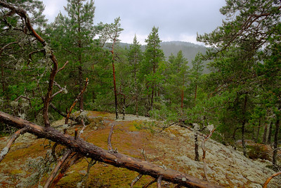 View from the Oxaberget lookout point near the Tiveden National Park parking area. The park preserves the inner Sweden granite + pine ecosystems.