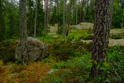 THin pine forests with random glacial erratics pepperd throughout.