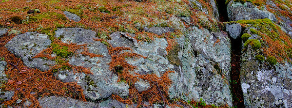Typical gound cover of weathers rock, cracks, moss, and pine needle litter (which does not favour much plant gowth.)